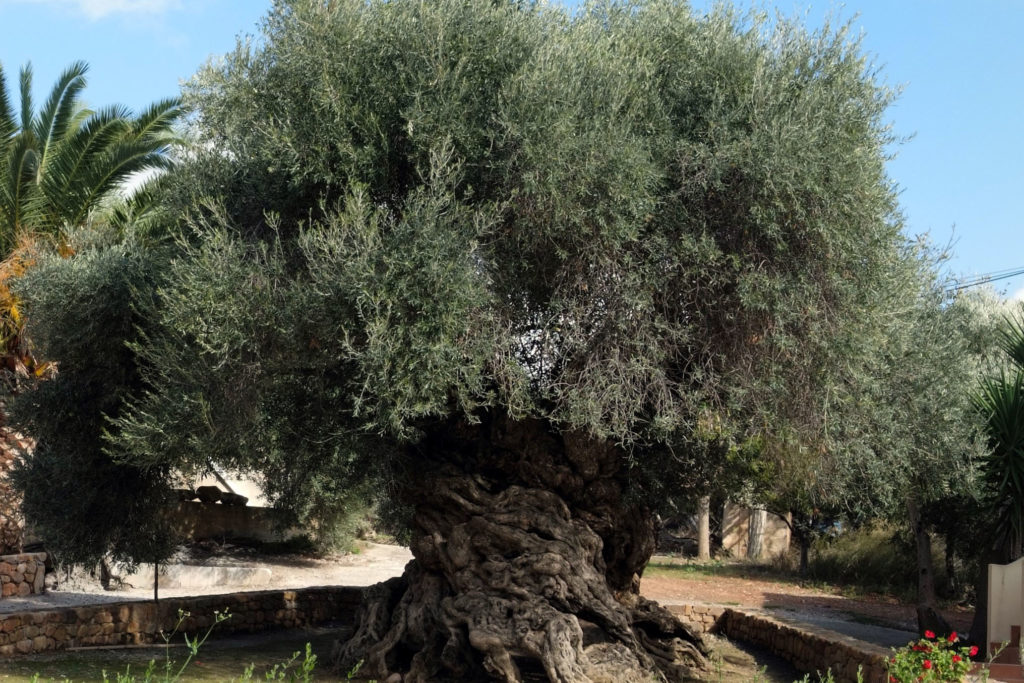 Discover the Miracle of Wine and Olive Oil - GS Tours Chania LTD